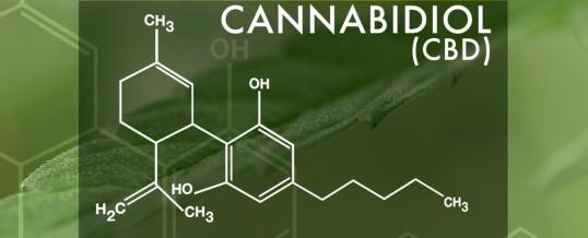 Canabidiol liberado para o tratamento de diversas doenças