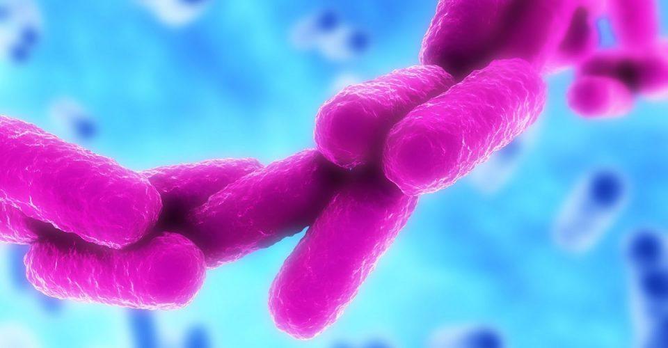 Bactéria Klebsiella pneumoniae exposta a clorexidina ganha resistência