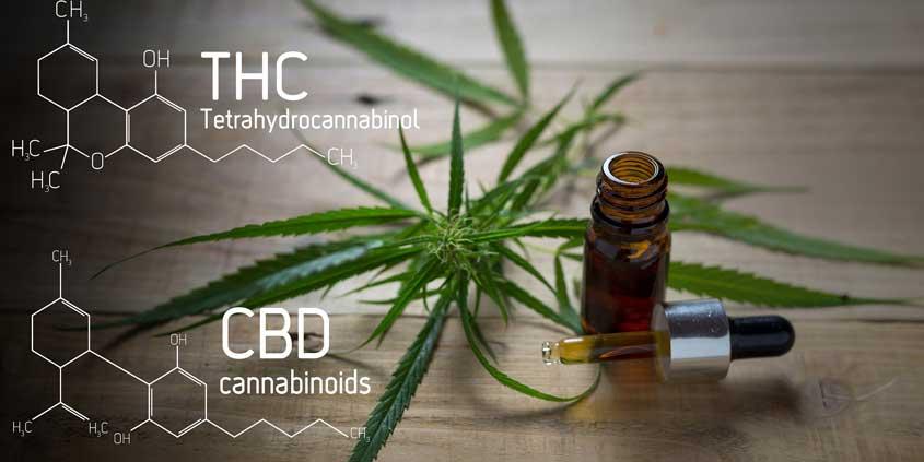 ANVISA-libera-comercialização-de-produtos-à-base-de-cannabis-em-farmácias
