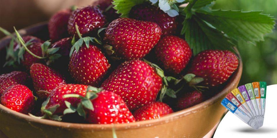 Análise-rápida-de-nutrientes-na-produção-de-morango
