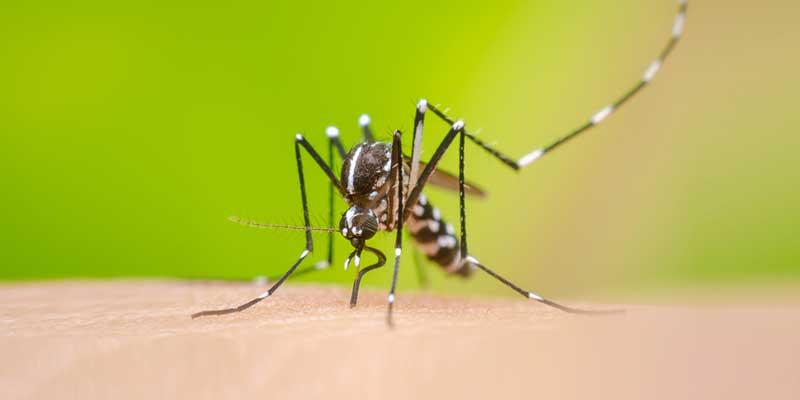 Kit-recentemente-registrado-na-Anvisa,-gera-inovação-na-capacidade-de-diagnóstico-de-doenças-como-dengue,-zika-e-chikungunya