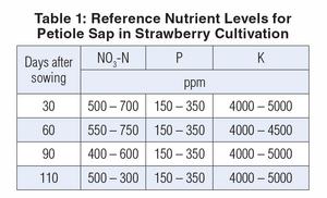 níveis de referência de nutrientes para a seiva de pecíolos no cultivo de morango