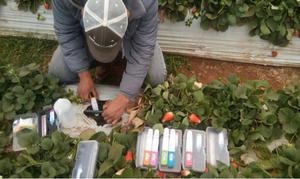 teste de água para irrigação LAQUAtwin