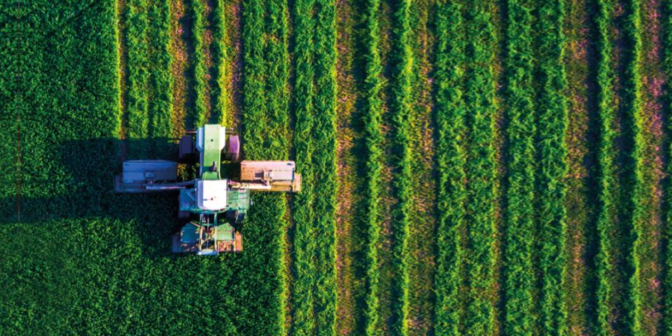 Vinhedos-franceses-temem-perder-terras-para-novas-zonas-livres-de-pesticidas